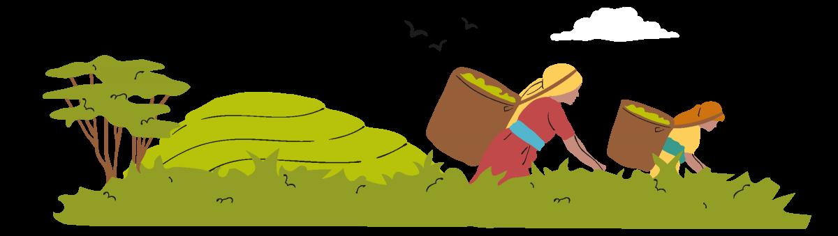 fairtrade illustration